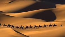 rulings-pertaining-to-hijrah